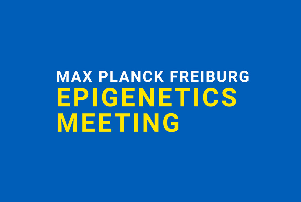 The international meeting on the broad area of epigenetics and chromatin takes place on November 30th - December 2nd, 2016, at the MPI-IE in Freiburg.