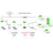 Project areas: Regulation of ubiquitination by the E2-enzyme E2-25K Regulation of sumoylation by its sole E2 enzyme Ubc9