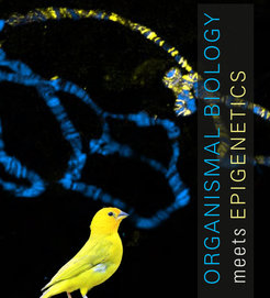 "<p>Max Planck Symposium on ""Organismal Biology meets Epigenetics"" – June 19-20, 2017 in the Harnack-Haus, Berlin</p>"