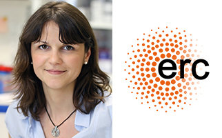 MPI-IE group leader receives ERC Starting Grant to investigate hematopoietic stem cell dormancy