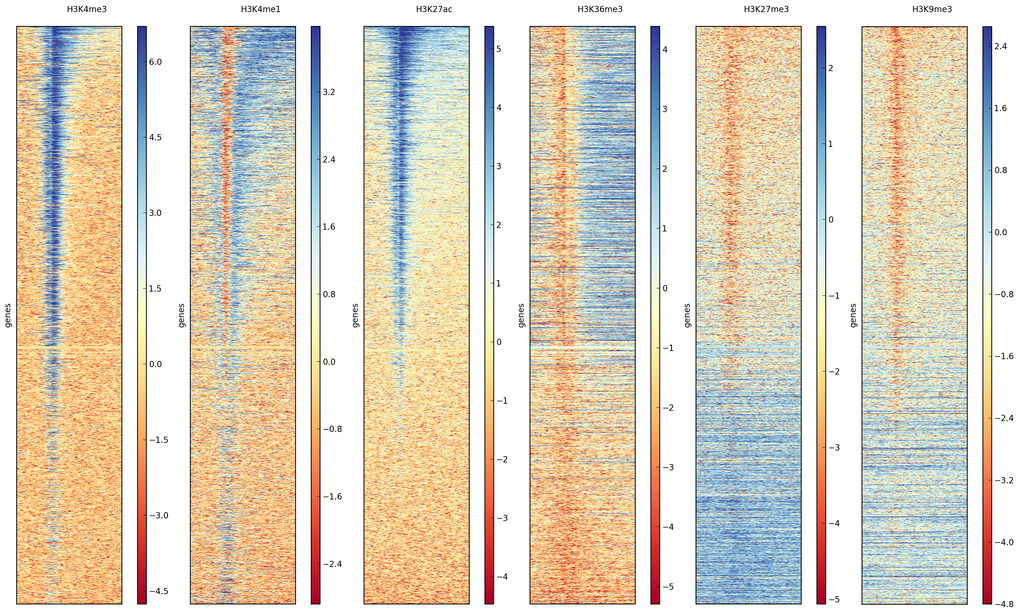 Heatmaps are useful tools to visualize genome-wide data, such as important histone marks around all human genes.