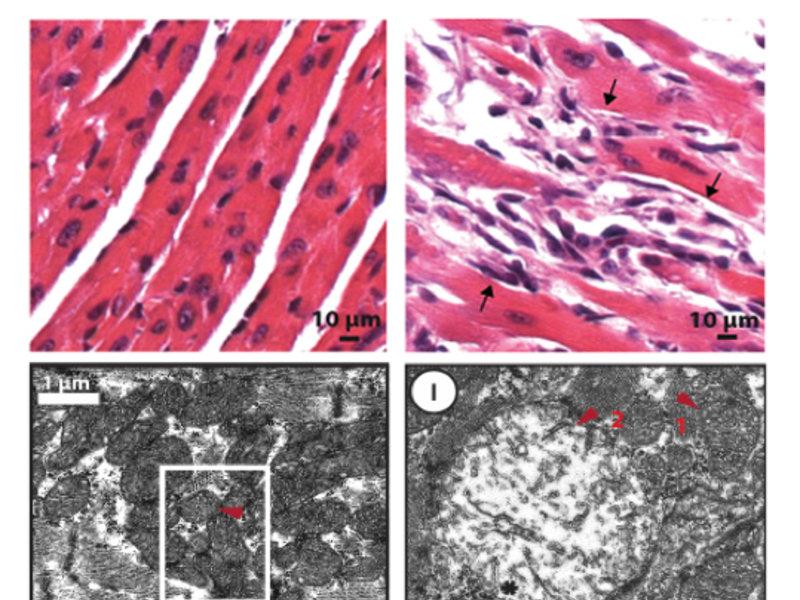 Janusköpfiges MOF | Max-Planck-Institut für Immunbiologie und Epigenetik