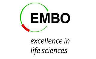EMBO welcomes 28 new Young Investigators