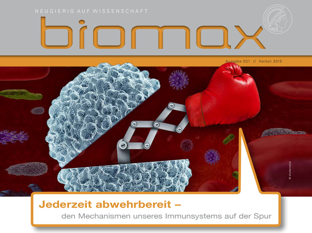 Several issues of BIOMAX deal with research topics of the MPI of Immunobiology and Epigenetics