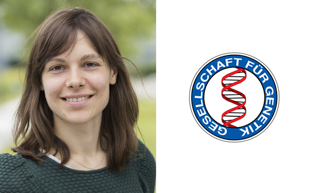 German Genetics Society honors MPG doctoral researcher for outstanding research on epigenetic inheritance